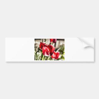 A beautiful Tulip Bumper Sticker