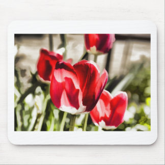 A beautiful Tulip Mouse Pad
