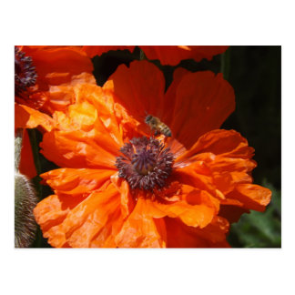 A Bee And A Poppy Postcard