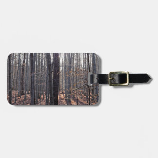 A beech forest in fall. bag tag