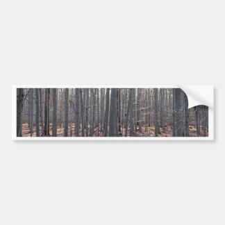 A beech forest in fall. bumper sticker