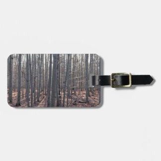 A beech forest in fall. luggage tag