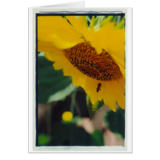 A Bee's Sunny Day! Card