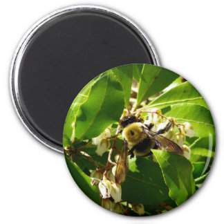 A Bees Texture 2 Inch Round Magnet