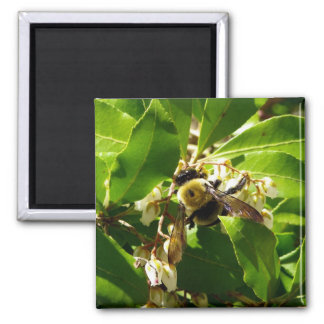 A Bees Texture 2 Inch Square Magnet