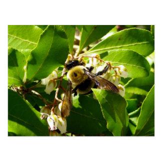 A Bees Texture Postcard
