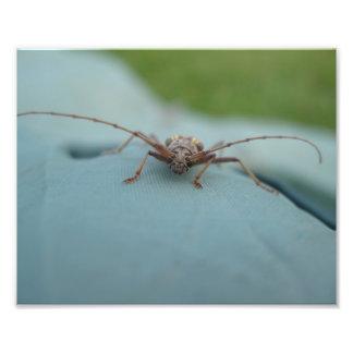 A Beetle Photograph