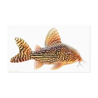 A Big Corydoras Sterbae Catfish Wrapped Canvas