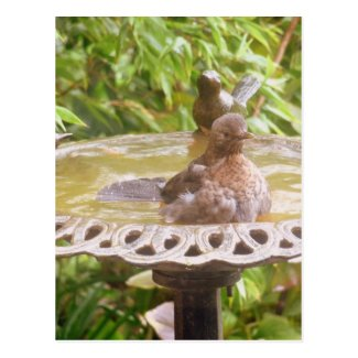 A Bird In The Bath Postcard