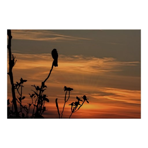 a bird in the tree at sunset poster