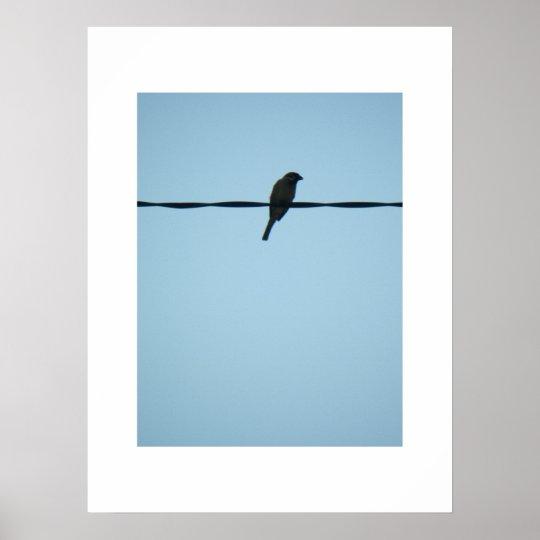 A Bird/Poster Poster