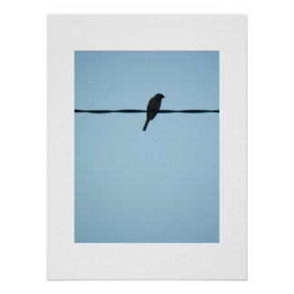 A Bird/Poster Posters