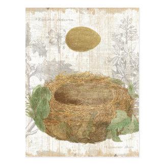 A Bird's Nest with a Brown Egg Postcard
