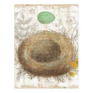 A Bird's Nest with a Green Egg Postcard