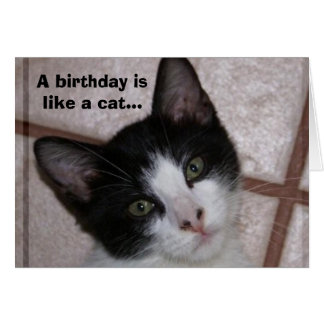 A birthday is like a cat... card
