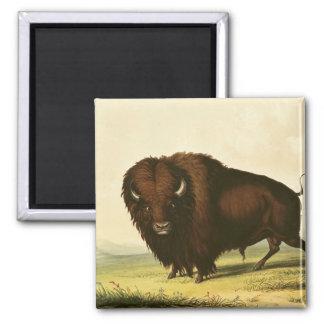 A Bison, c.1832 Magnet