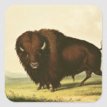 A Bison, c.1832 Square Stickers