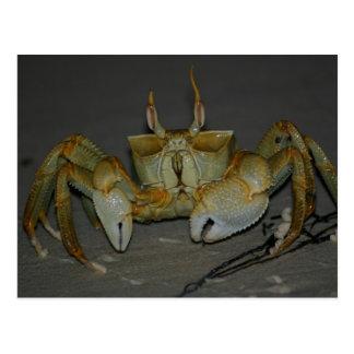 A bit crabby... postcard