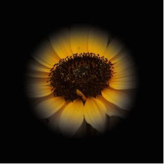 A Bit Of Sunflower Photo Sculpture