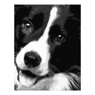 A black and white Border collie Letterhead