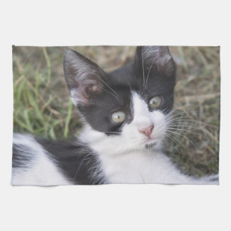 A black and white cat kitten in the garden. hand towel