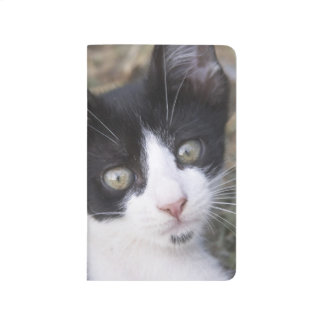 A black and white cat kitten in the garden. journal