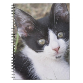 A black and white cat kitten in the garden. spiral note books