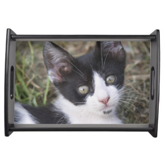 A black and white cat kitten in the garden. service trays