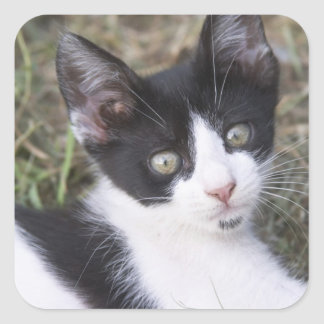 A black and white cat kitten in the garden. square sticker