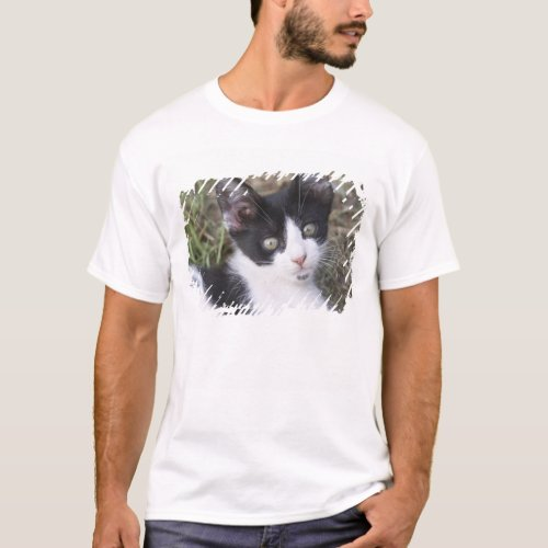 A black and white cat kitten in the garden T_Shirt