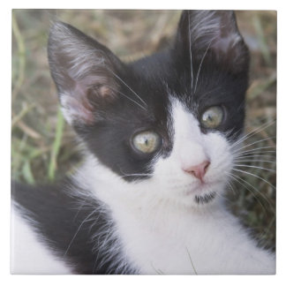 A black and white cat kitten in the garden. tile