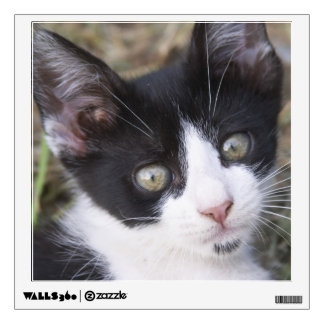 A black and white cat kitten in the garden. wall decal
