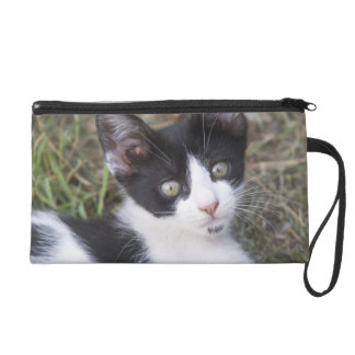 A black and white cat kitten in the garden. wristlet purse
