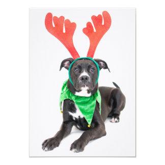 A black and white Labrador Retriever/Pit Bull Card