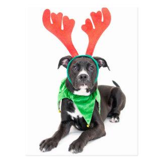 A black and white Labrador Retriever/Pit Bull Postcard