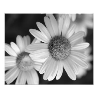 A black and white photo of a flower