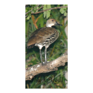 A Black-billed Whistling Duck Perched In A Tree Card