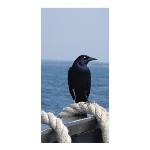 A Black Bird on the Ferry Photo Greeting Card