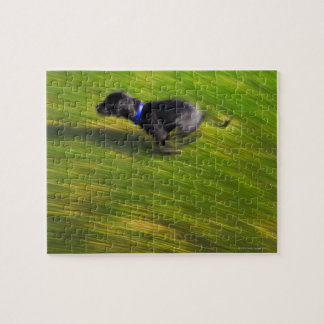 A black dog running jigsaw puzzle
