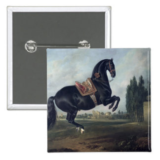 A black horse performing the Courbette Button