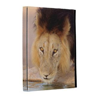 A Black Maned Lion at a waterhole iPad Case