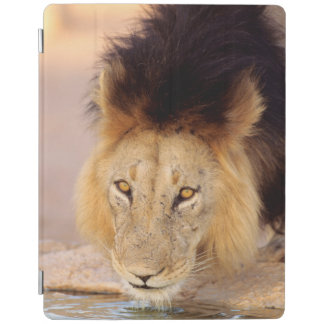 A Black Maned Lion at a waterhole iPad Cover