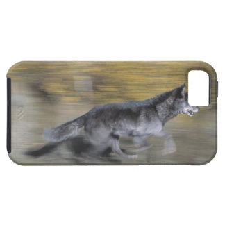 A black wolf on the run iPhone SE/5/5s case