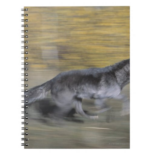 A black wolf on the run notebook
