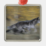 A black wolf on the run ornaments