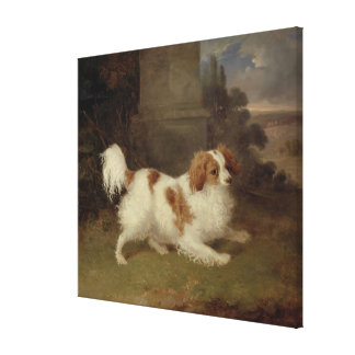 A Blenheim Spaniel c 1820-30 oil on canvas Gallery Wrap Canvas