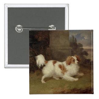 A Blenheim Spaniel, c.1820-30 (oil on canvas) Pinback Button