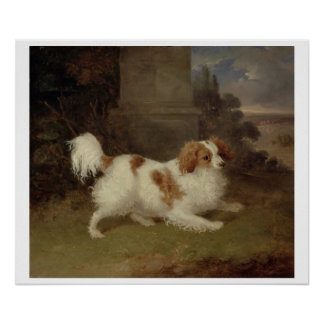 A Blenheim Spaniel c 1820-30 oil on canvas Poster