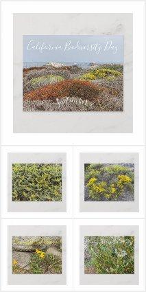 A Blooming California: Asilomar - Big Sur