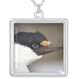 A blue-eyed shag in Antarctica Silver Plated Necklace